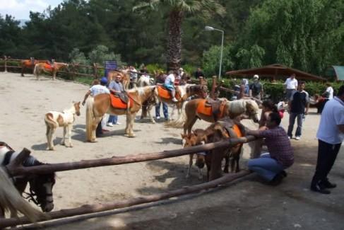 kemalpaşa kımız at çiftliği turu